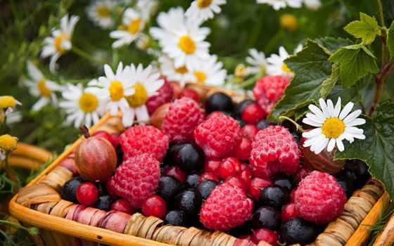 группы, добрым, малина, ягоды, крыжовник, смородина, утром,