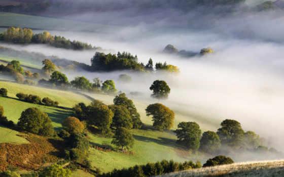 mist, деревя, коллекция