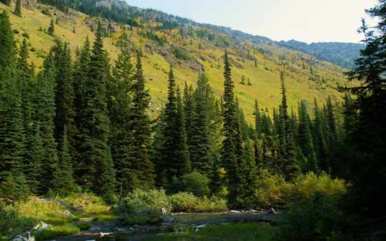usa, картинка, baker, national, snoqualmie, mt, ёль, природа, леса, washington,