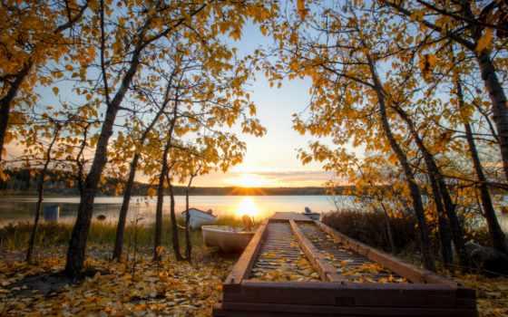 осень, sun, trees