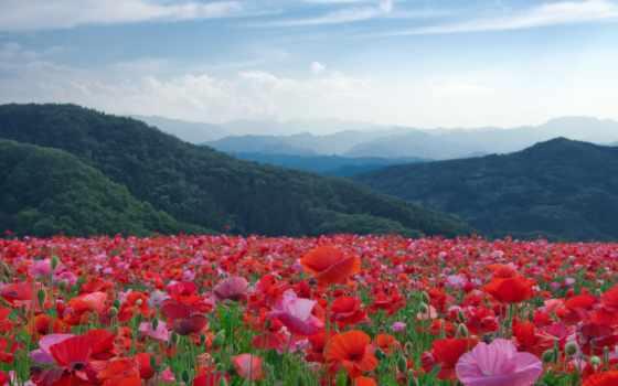 природа, landscape, цветы, горы, trees,