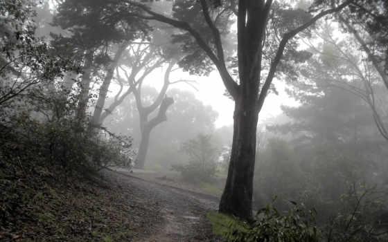 туман, лес, мрачные