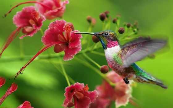 цветы, exotica, колибри, люди, цветов,