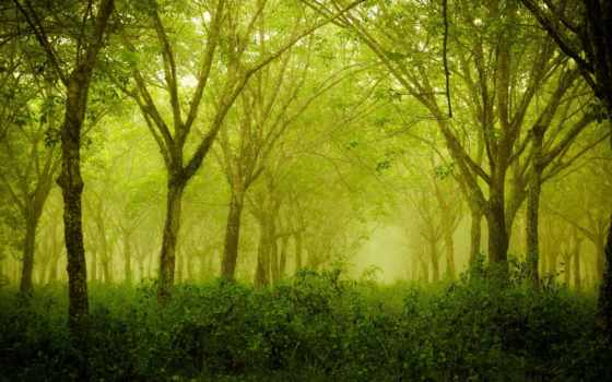 природа, summer, лес Фон № 135185 разрешение 1920x1080