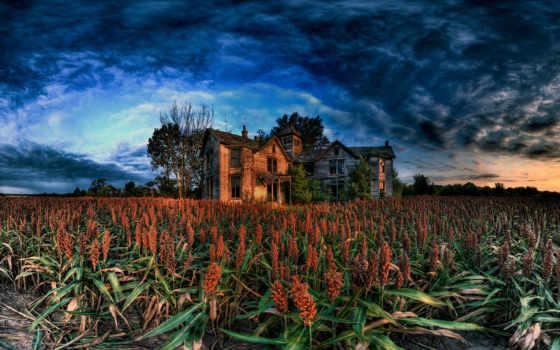house, abandoned, поле, триллер, lodge, ужасы, лес, под, among, лесу,
