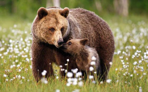 animal, медведь, два, science, black, martian, лет, рубашка, китаянка, браун, baby
