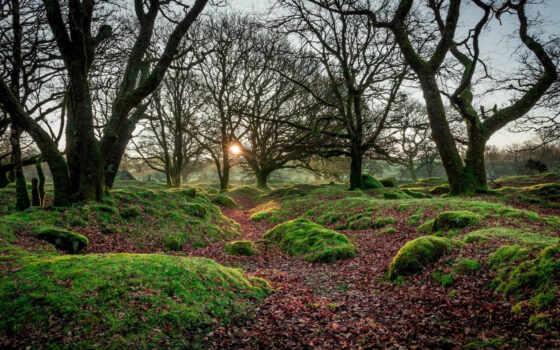 дерево, сентябрь, бесплатный, les, дымка, fore, гора, утро, озеро, landscape, утро