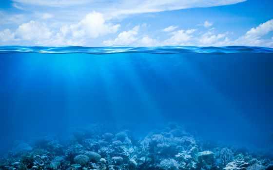 морского, аквариума, bottom, днк, клипарт, рифы, поверхности, коралловые, подводные, морское, морских, растровый, водой, горизонта, воды,