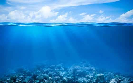 морского, аквариума, bottom