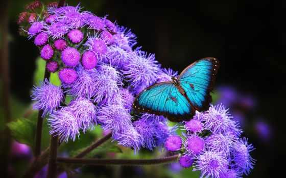 rosa, бабочки, click