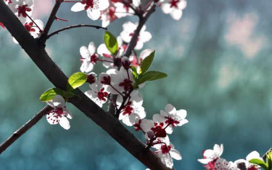 цветы, минимализм