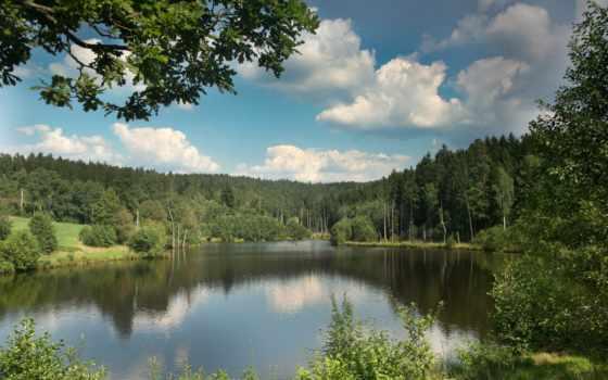картинка, природа, леса Фон № 95822 разрешение 2048x1365