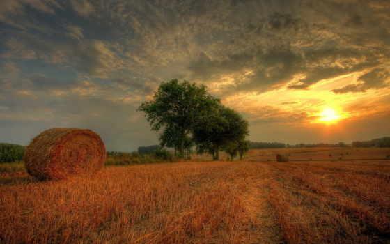 alcatel, сено, зарегистрируйте, от, дотянуться, войдите, наши, fraggie, природа, поле,