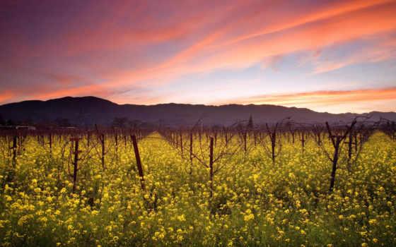 дек, поле, кусты, вечер, природа, vineyard,