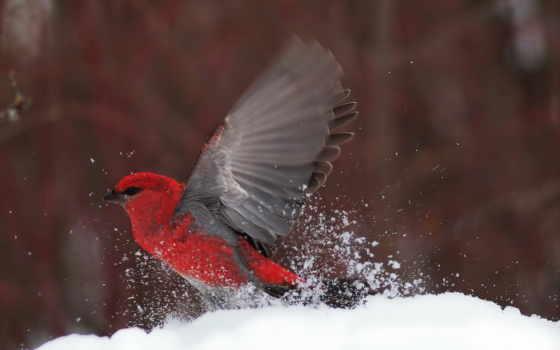 птицы, снегирь, самолёт