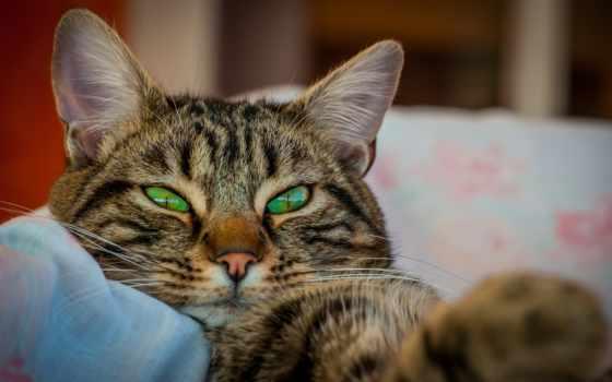 кот, animal, глаза, ушки, морда