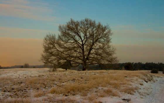 nature, winter