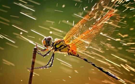 ,насекомые,стрекоза,дождь,