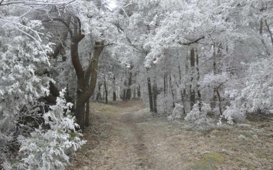 зимние, дни, красивые