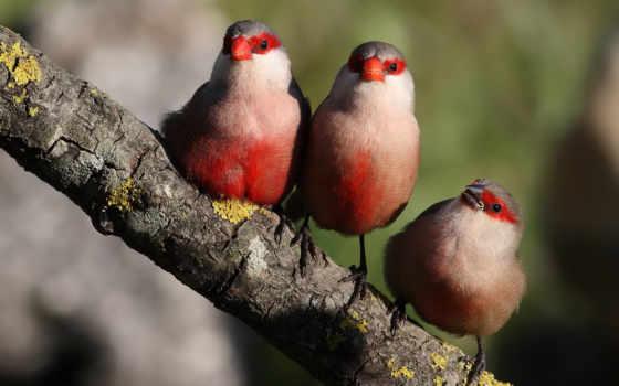 птицы, branch, трио