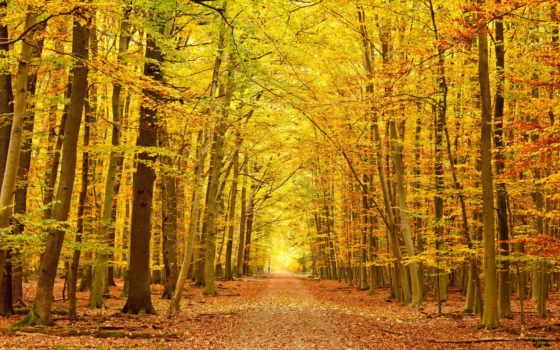 красиво, листва, coupe, осень, каталог, фотопечать, шкаф, фото, спальню, фотообои,