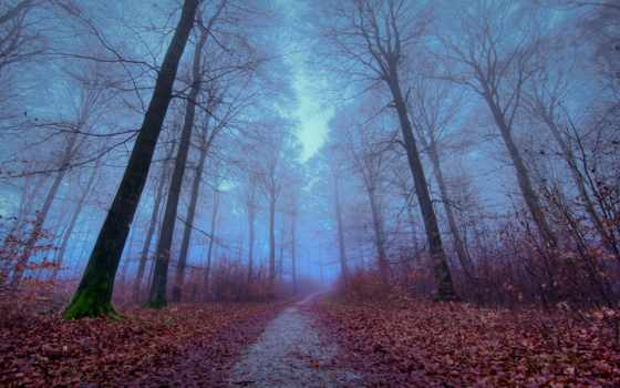 foggy, лес, осень