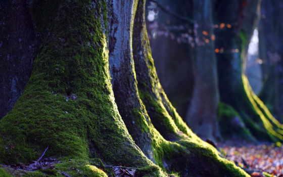 макро, мох, природа, дерево,