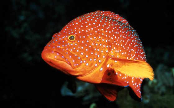 fish, pisces, леопард