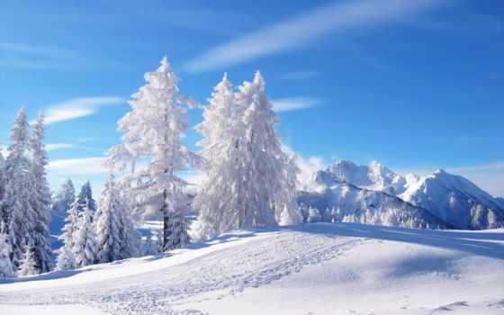 winter, снег, год, time, поляна, лес, морозный, день, холод, komotoz