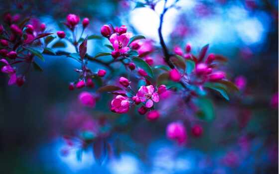 rosa, feature, best, уж, loaded, gallery, ретушь, весна, deviation