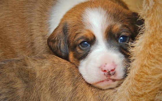 щенок, собака, cute, little, группа, порода