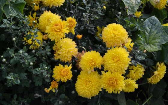 flowers, desktop, цветы Фон № 70744 разрешение 4178x2785