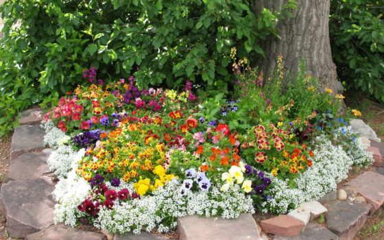 цветы, глазки, анютины, tagetes, фиалки, blumen,, löwenmäuler, stiefmütterchen, garten,