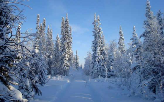 winter, красивые, природа, пейзажи -, зимние, trees, снег, landscape, сугробы, фотографий,