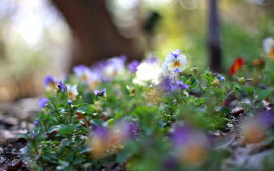 под, дождем, цветы, эти, дождь, этим, online, луговых, цветов, margin, красивые,