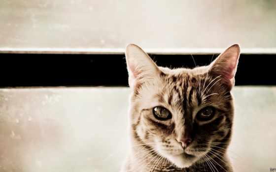 zhivotnye, кошки, feline, кот, взгляд, питомцы, домашние,