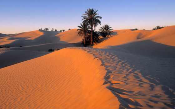 пустыни, пальмы, пустыне, сахара, travel, luxury, крупнейшей, мире, voodoohop, растущие,