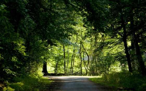 пути, выбор, притча, мотивации, лес, притчи, тропинка, пользователя, коллекция, яndex, они,