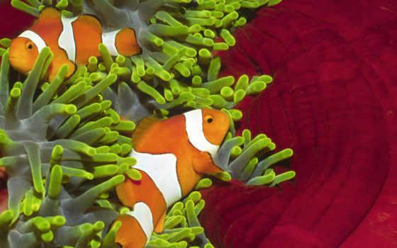 рыбки, красивые, zhivotnye, pisces, самые, морские, feeding,