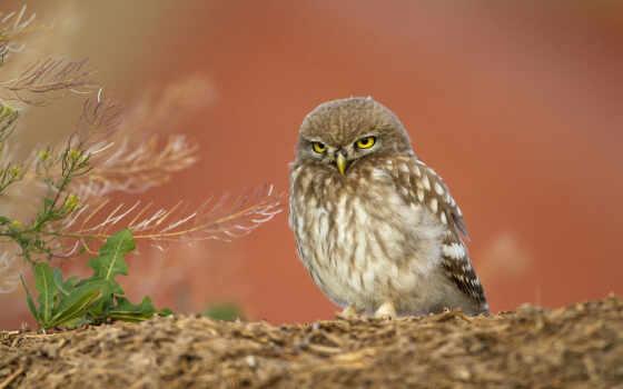 , птица, краска, młoda, color, отличаться, сова, биг, zdjęcia, tapet, strona