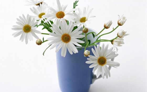 оо, ãâòßòò, flower, desktop, floral, dreamies, salvează, днем, рождения, ммйн, background, ai, аааа,