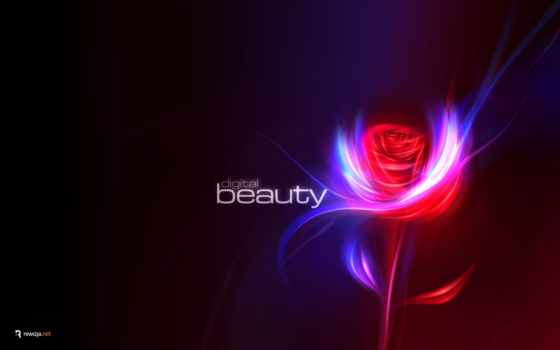 desktop, red, wide, beauty, rose, flower,