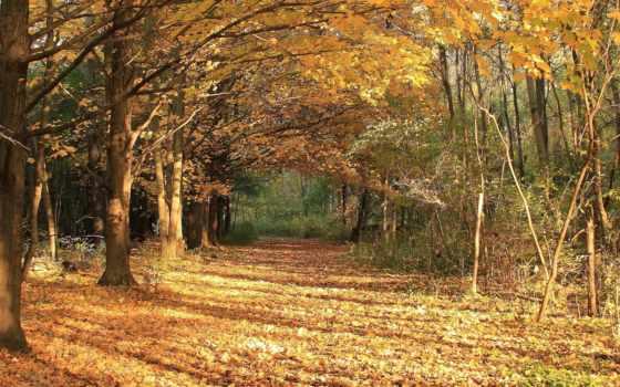 осень, листья, природа Фон № 57414 разрешение 1920x1080