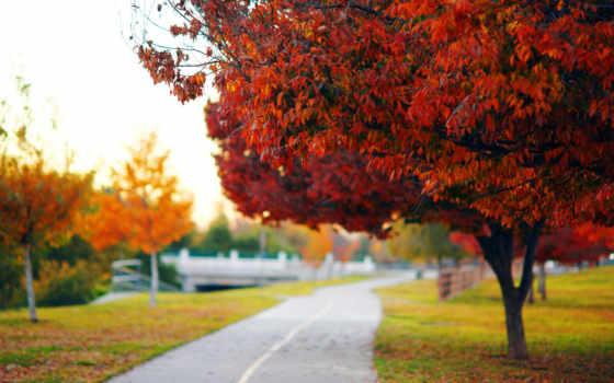 park, дерева, трек, осень, attire, trees, дерево, дорога,