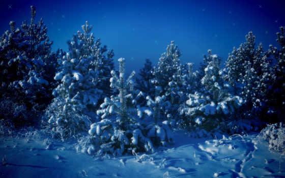 год, new, happy, christmas, любой, вкус, free,