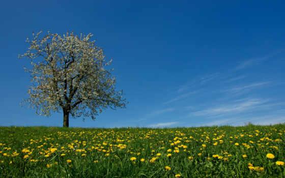 lengzem, луг, дерево, mizo, одуванчики, gnat, трава, небо, cvety, весна, lalrinchhana,