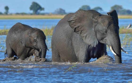 слон, butch, cassidy,