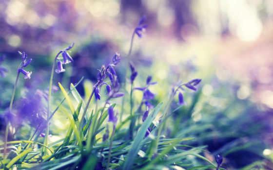 весна, трава, cvety, высоком, качестве, нояб, базе,