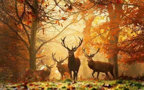 осень, золотая, природа, красивые, широкоформатные, пейзажи -, клипарт, trees, осенние,