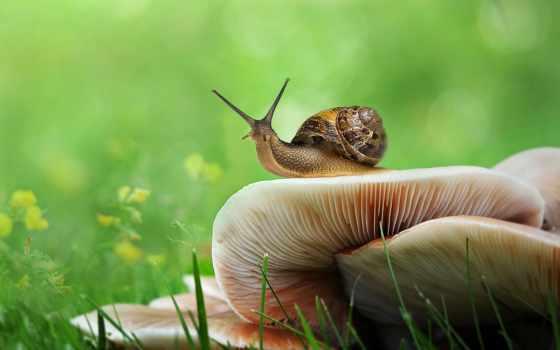 грибы, улитки, snail, боке, zhivotnye, бесплатные, трава, зелёный, картинка,
